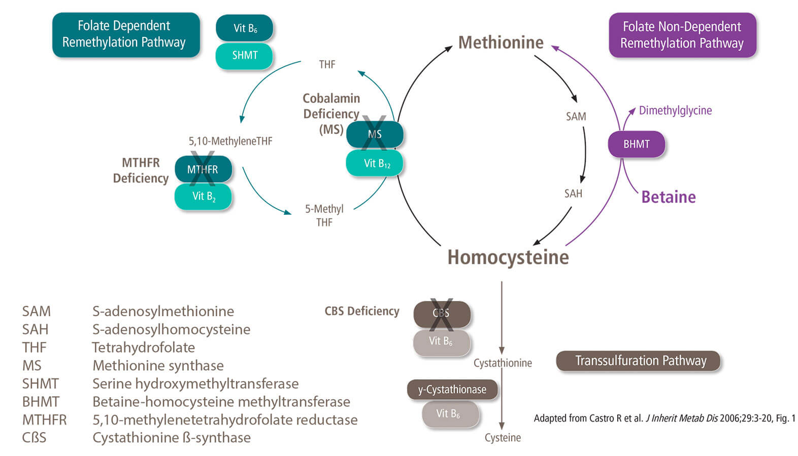 Plasma homocysteine lowering mechanism of action
